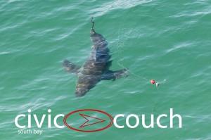 A juvenile shark caught on a fisherman's line in Manhattan Beach